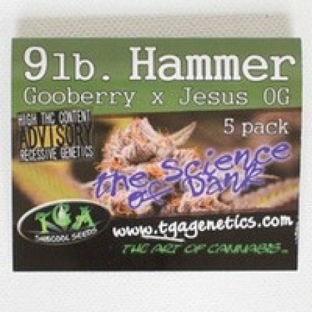 9 Pound Hammer - Seeds